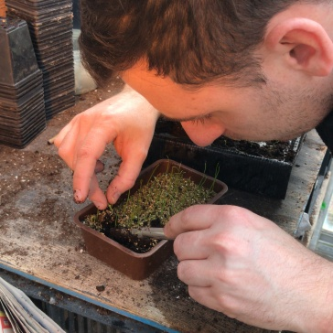 Carefully removing the seedling from its original seed tray using the dibber tool