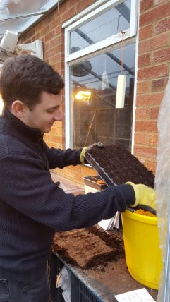 Levelling out the compost in the cell tray