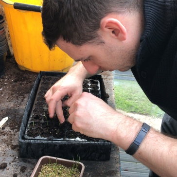 Transplanting each seedling into the cell tray